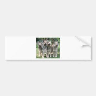 Berger Picard Puppies Bumper Sticker