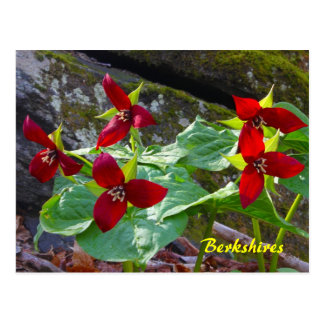 Berkshires Massachusetts Red Trillium Wildflower Postcard