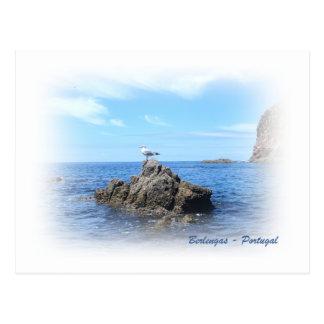 Berlengas-Gull postcard