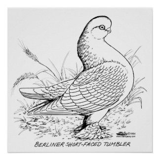 Berliner Pigeon Black and White Poster