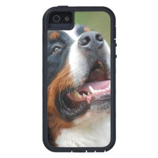 Berner Sennenhund iPhone 5 Covers