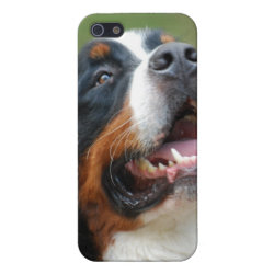 Case Savvy iPhone 5 Matte Finish Case with Bernese Mountain Dog Phone Cases design