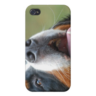 Berner Sennenhund Dog iPhone 4 Case