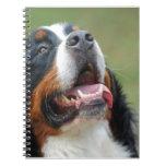 Berner Sennenhund Dog Notebook