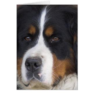 Berner Sennenhund Greeting Card