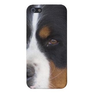 Berner Sennenhund Covers For iPhone 5