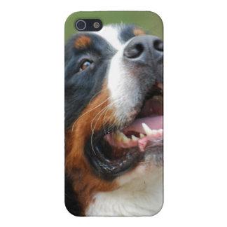 Berner Sennenhund Case For iPhone 5