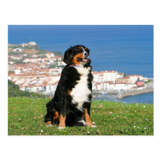 Bernese cattle dog posing at the beach postcard