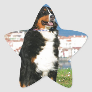 Bernese cattle dog posing at the beach star sticker