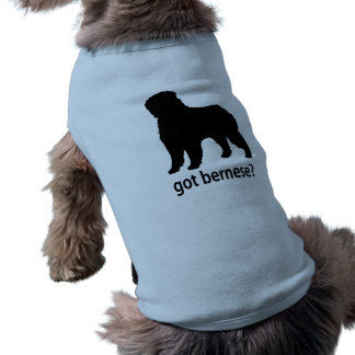 Bernese conseguido ropa de perro
