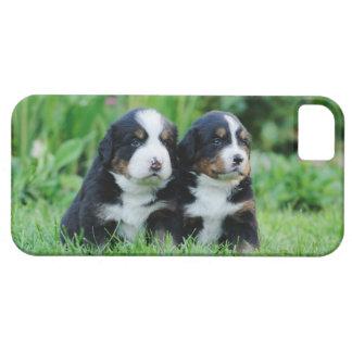 Bernese iPhone SE/5/5s Case