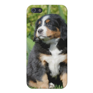 Bernese  iPhone SE/5/5s cover