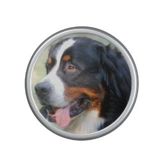 bernese-mountain-dog-10 altavoz