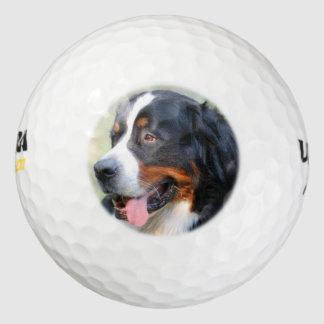 bernese-mountain-dog-10 golf balls