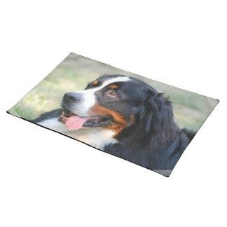 bernese-mountain-dog-10 placemats