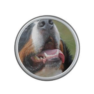 bernese-mountain-dog-14 altavoz
