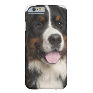 Bernese Mountain Dog (1 year old) Barely There iPhone 6 Case