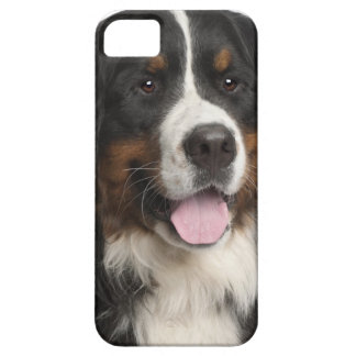 Bernese Mountain Dog (1 year old) iPhone SE/5/5s Case