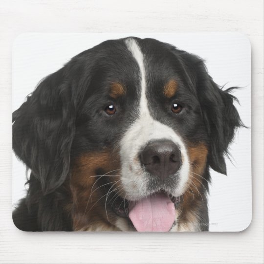Bernese Mountain Dog (1 year old) Mouse Pad