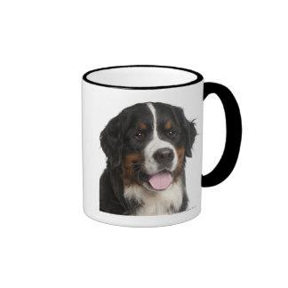 Bernese Mountain Dog (1 year old) Ringer Mug