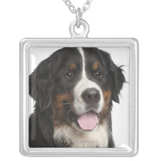 Bernese Mountain Dog (1 year old) Silver Plated Necklace