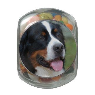 bernese-mountain-dog-7 jelly belly candy jar