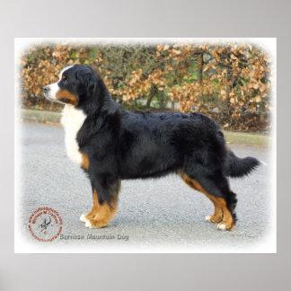 Bernese Mountain Dog 9T066D-221 Poster