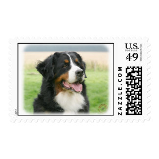 Bernese Mountain Dog 9Y066D-046 Postage Stamp