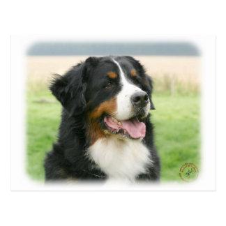 Bernese Mountain Dog 9Y066D-046 Postcards