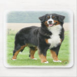 Bernese Mountain Dog 9Y066D-133 Mouse Pads