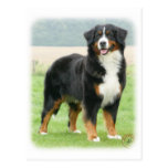 Bernese Mountain Dog 9Y066D-133 Post Cards