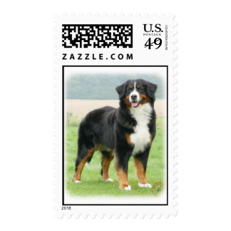 Bernese Mountain Dog 9Y066D-133 Stamp