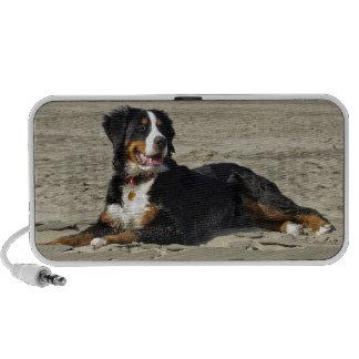 Bernese Mountain dog beautiful doodle speakers