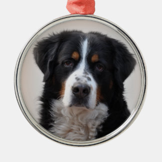 Bernese Mountain dog beautiful photo, gift Christmas Tree Ornament