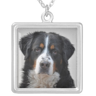 Bernese Mountain dog beautiful photo, gift Silver Plated Necklace