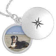 Bernese Mountain dog beautiful photo locket