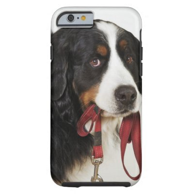 Bernese Mountain Dog (Berner Sennenhund) Tough iPhone 6 Case