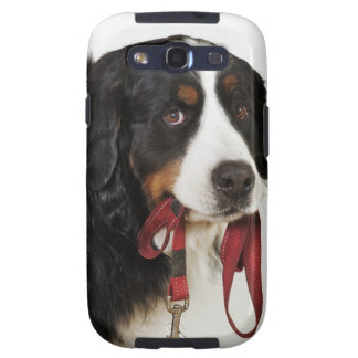 Bernese Mountain Dog (Berner Sennenhund) with Galaxy S3 Case