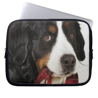 Bernese Mountain Dog (Berner Sennenhund) with Computer Sleeve
