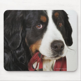Bernese Mountain Dog (Berner Sennenhund) with Mouse Pad