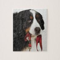 Bernese Mountain Dog (Berner Sennenhund) with Puzzles