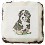 Bernese Mountain Dog Brownie
