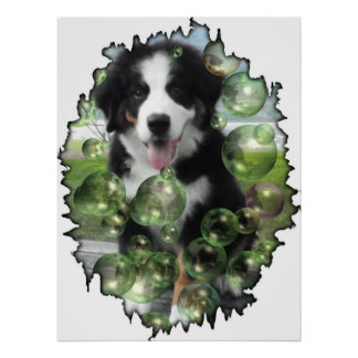 Bernese Mountain Dog Bubble poster