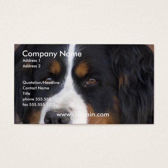 Bernese Mountain Dog Business Card