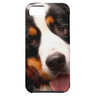 Bernese Mountain Dog iPhone 5 Covers
