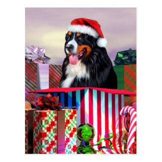 Bernese Mountain Dog Christmas Surprise Post Cards