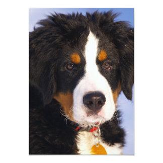 Bernese Mountain Dog - Cute Puppy Photo Card