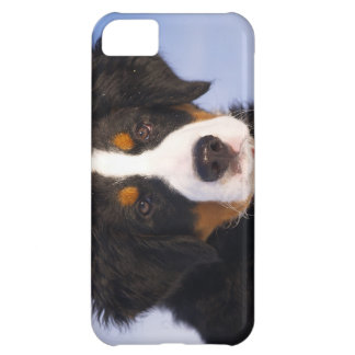 Bernese Mountain Dog - Cute Puppy Photo Cover For iPhone 5C
