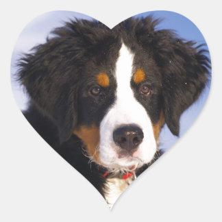 Bernese Mountain Dog - Cute Puppy Photo Heart Sticker