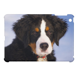 Bernese Mountain Dog - Cute Puppy Photo iPad Mini Cases
